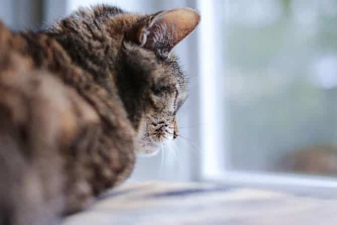A cat named Kittle looking out the window