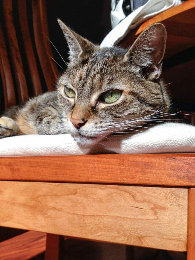 A cat named Kittle resting on a wooden table
