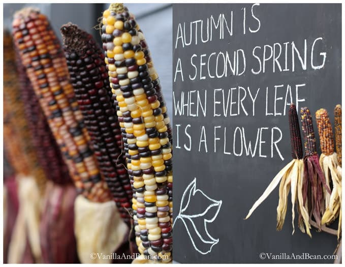 """A variety of corn lined up beside a board with quote """"Autumn is a second spring when every leaf is a flower."""""""