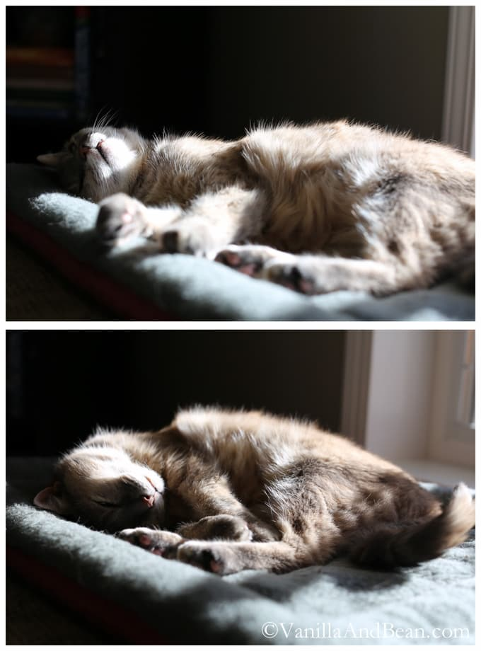 Claire Cat sleeping in the sunshine.