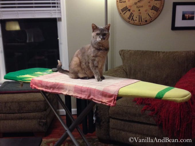 Claire Cat setting on an ironing board ready for her SubQ treatment.