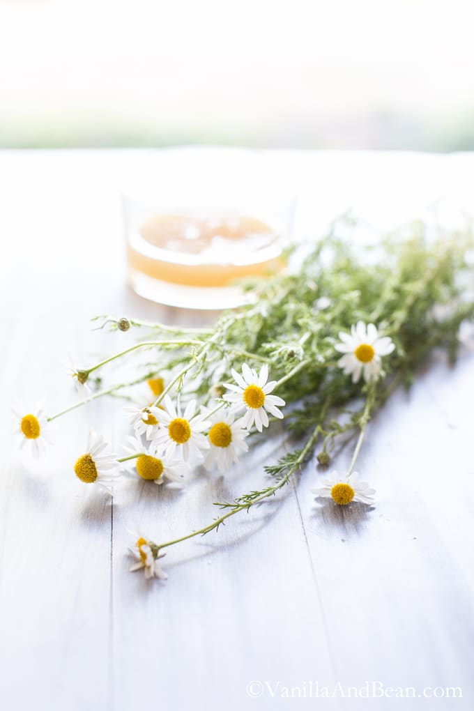 A bunch of fresh chamomile on a table.